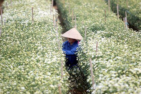 Nam thanh nu tu Ha thanh cuong si cuc hoa mi - Anh 5