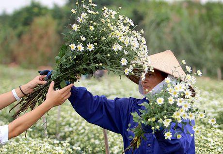 Nam thanh nu tu Ha thanh cuong si cuc hoa mi - Anh 6