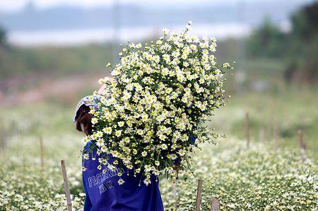 Nam thanh nu tu Ha thanh cuong si cuc hoa mi - Anh 7