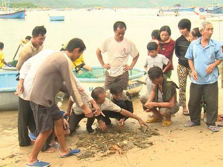 Lao dao cuoc song nguoi dan vung ron lu Song Cau (Phu Yen) - Anh 1