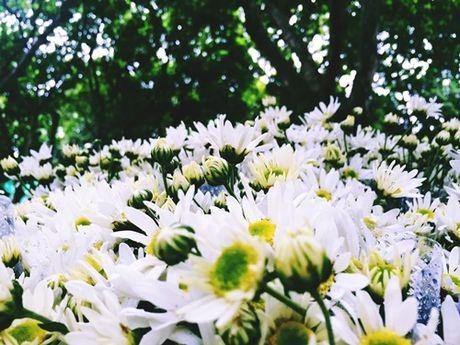Nang 'lo lem' cuc hoa mi hoa 'nu hoang' noi pho thi - Anh 4