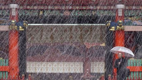 Hien tuong la: Tokyo tuyet roi bat thuong trong thang 11 - Anh 1