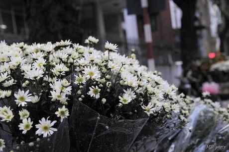 Diu dang cuc hoa mi xuong pho - Anh 10