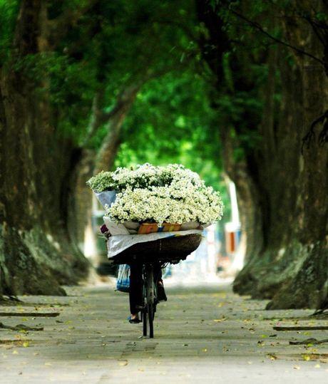 Diu dang cuc hoa mi xuong pho - Anh 3