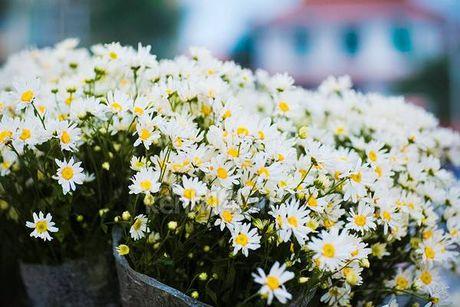 Diu dang cuc hoa mi xuong pho - Anh 8