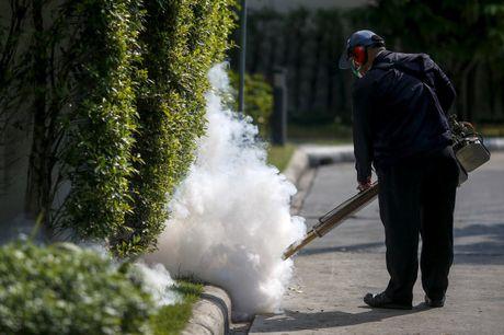 Bi an virut Zika o chau A - Anh 1