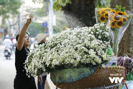 Cuc hoa mi khong chi dep, con mang gia tri kinh te cao - Anh 1