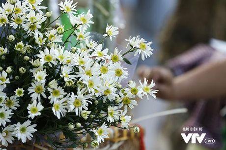 Cuc hoa mi khong chi dep, con mang gia tri kinh te cao - Anh 2