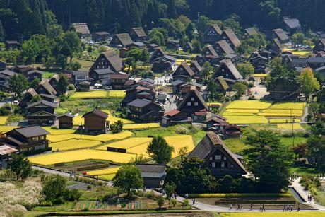 Canh dep nhu tranh o Shirakawa-go, ngoi lang con nguyen net hoang so o Nhat Ban - Anh 3
