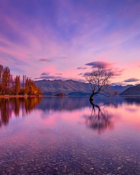 Chang ai cam long duoc truoc ve dep say dam cua New Zealand - Anh 7