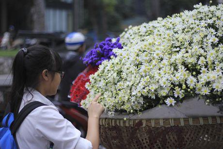 Kiem bon tien tu vuon cuc hoa mi - Anh 10