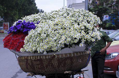 Kiem bon tien tu vuon cuc hoa mi - Anh 11