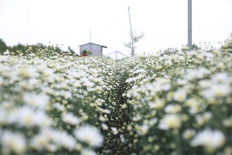 Kiem bon tien tu vuon cuc hoa mi - Anh 3