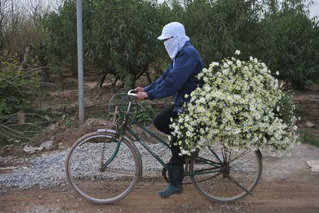 Kiem bon tien tu vuon cuc hoa mi - Anh 8