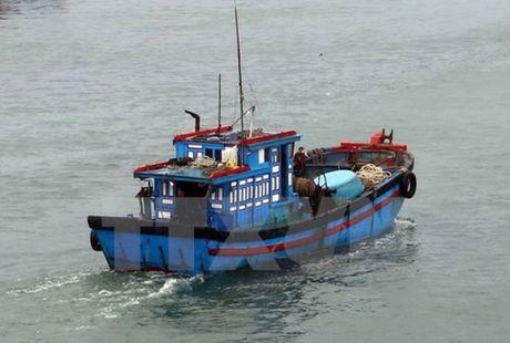 De nghi cho 29 tau ca tranh bao tai Indonesia va Philippines - Anh 1