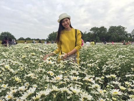 Nguoi Ha Noi ru nhau di chup anh cuc hoa mi - Anh 7