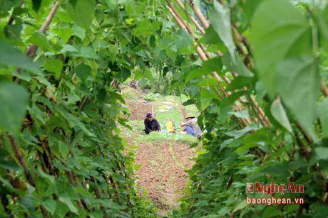 Ban Thai trong rau thu cong phuc vu thi truong Tet - Anh 10