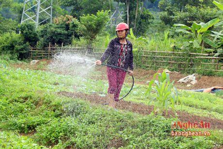 Ban Thai trong rau thu cong phuc vu thi truong Tet - Anh 12