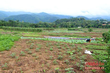 Ban Thai trong rau thu cong phuc vu thi truong Tet - Anh 1