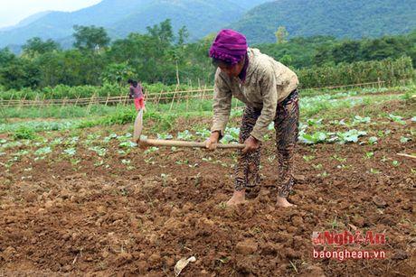 Ban Thai trong rau thu cong phuc vu thi truong Tet - Anh 2