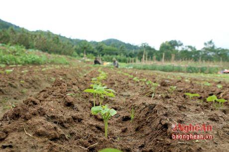 Ban Thai trong rau thu cong phuc vu thi truong Tet - Anh 6