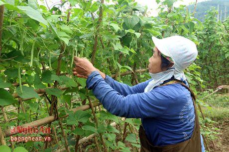 Ban Thai trong rau thu cong phuc vu thi truong Tet - Anh 8
