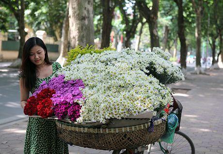 Mua cuc hoa mi xuong pho - Anh 1