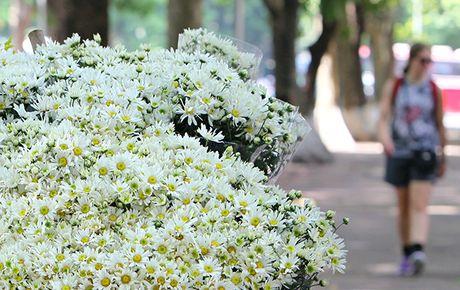 Mua cuc hoa mi xuong pho - Anh 2