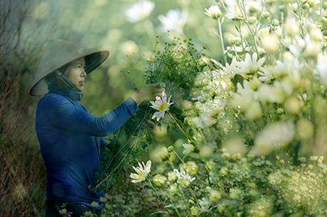Mua cuc hoa mi xuong pho - Anh 8