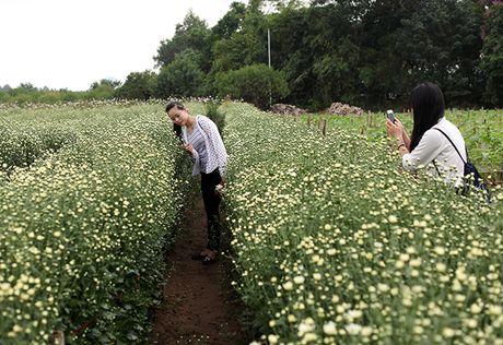 Mua cuc hoa mi xuong pho - Anh 9
