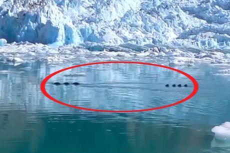 Nghi ngo sinh vat la khong lo xuat hien o Alaska - Anh 1