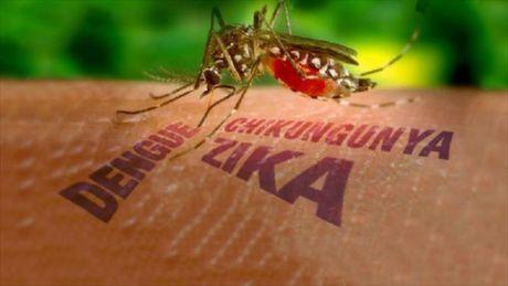TP.HCM: 9 thai phu nhiem virus Zika - Anh 1