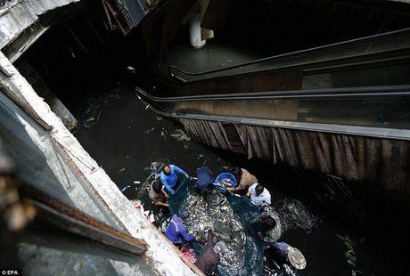 La lung 'ao ca' hang nghin con trong trung tam thuong mai bo hoang - Anh 7