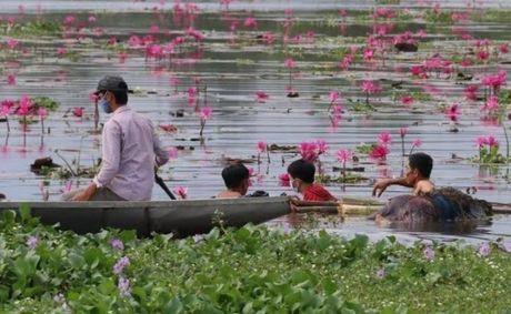 Quang Nam: Hai ngay phat hien 3 thi the troi song - Anh 1