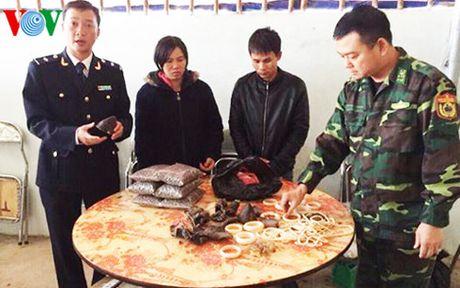 Phat hien van chuyen trai phep tren 3,3kg nghi nga voi, sung te giac - Anh 1