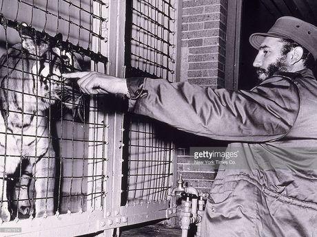 Anh lich su it biet ve lanh tu Cuba Fidel Castro (1) - Anh 4