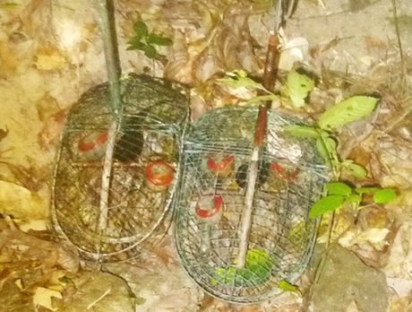 Da Nang: Bat qua tang doi tuong dat bay dong vat hoang da trong rung Son Tra - Anh 1
