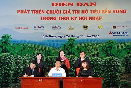 VietABank tai tro von vay cho cac ho nong dan trong ho tieu - Anh 2