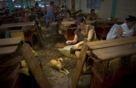 Ben trong trang trai san xuat xi ga noi tieng Cuba - Anh 10