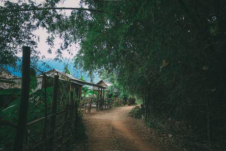 Hoa cai phu sac trang khap nui doi Moc Chau - Anh 1