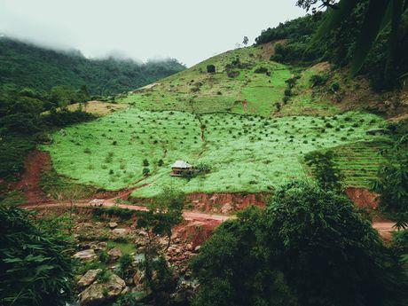 Hoa cai phu sac trang khap nui doi Moc Chau - Anh 3