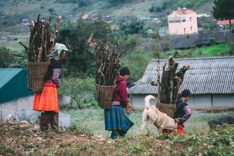 Hoa cai phu sac trang khap nui doi Moc Chau - Anh 6