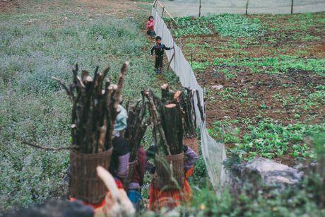 Hoa cai phu sac trang khap nui doi Moc Chau - Anh 7