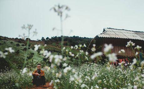 Hoa cai phu sac trang khap nui doi Moc Chau - Anh 8
