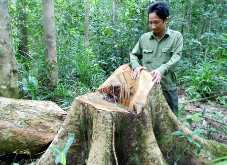 Binh Dinh khoi to vu an pha rung phong ho dau nguon - Anh 1