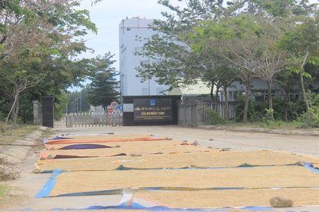 Hoang lanh nha may 2.000 ty, 1 nam lo 200 ty - Anh 13