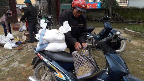 Bao NTNN/ Dan Viet: Ho tro con giong cho ba con vung ron lu - Anh 4