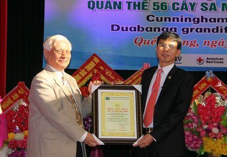 Rung sa mu dau 'khong lo' duoc cong nhan cay di san Viet Nam - Anh 1