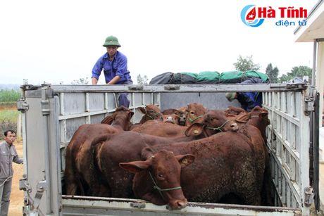 MC Phan Anh trao bo cho ba con vung lu Huong Khe - Anh 1