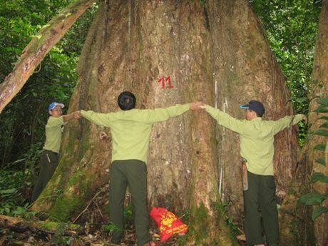 Trao bang cong nhan quan the cay di san o Que Phong - Anh 1